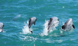 trouwen dolfijnen christchurch