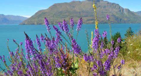 Wanaka Lake Nieuw Zeeland