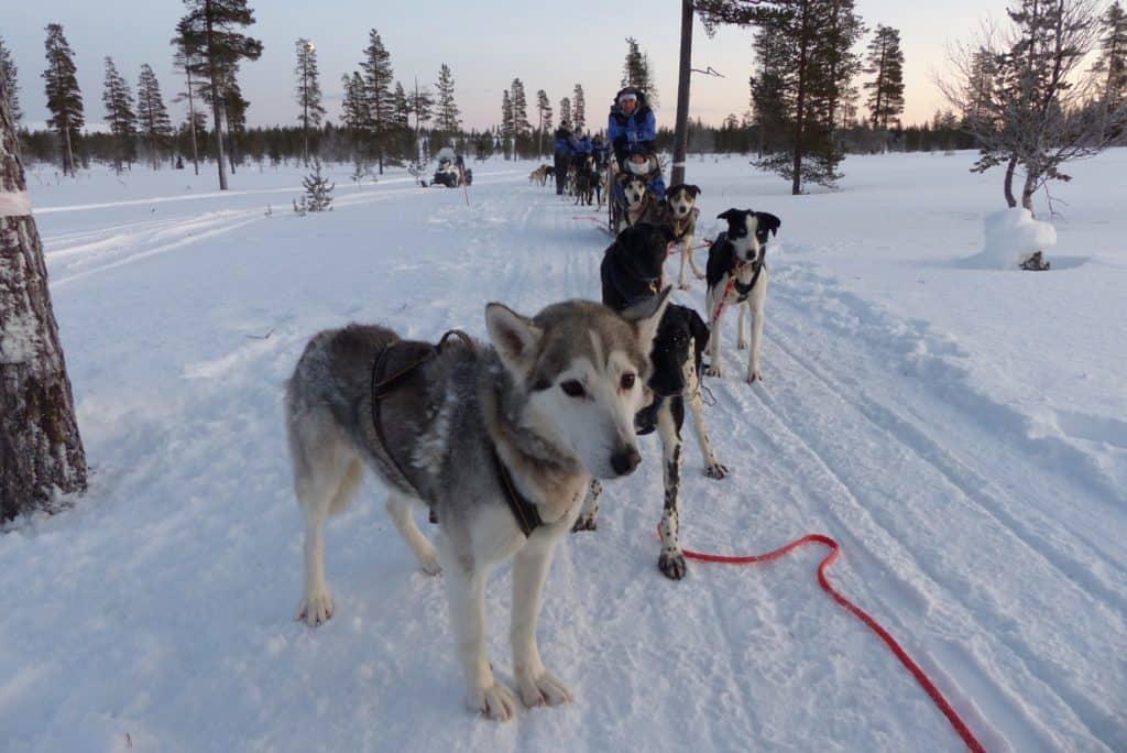 Trouwen in Finland 2020